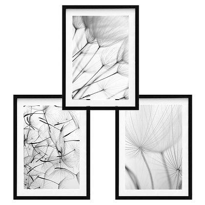 Dandelion Photography / Desde 20.000 c/u