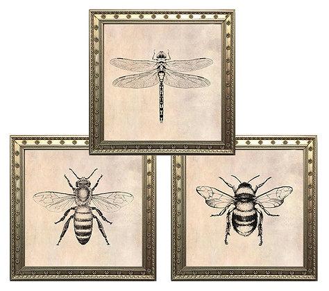 Insectos (3 diseños disponibles) / Desde 15.000 c/u