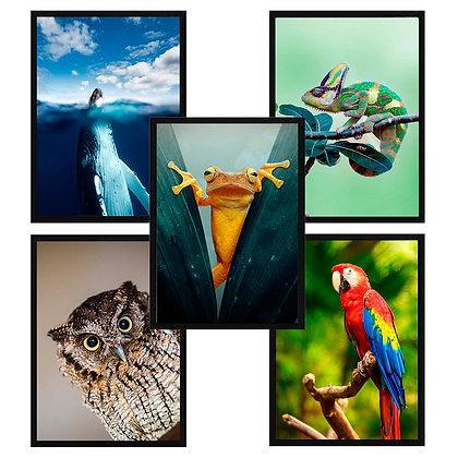 Animales color / Desde 20.000 c/u