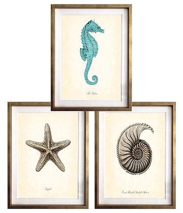 Mar (5 diseños disponibles) / Desde 13.500 c/u