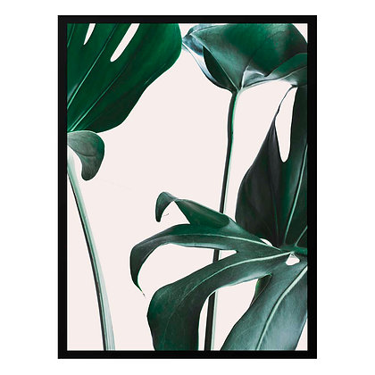 Tropical Leaf / Desde 20.000