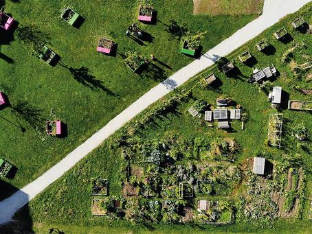 Potagers urbains & biodiversité