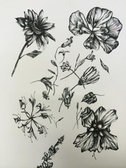 Flower Studies
