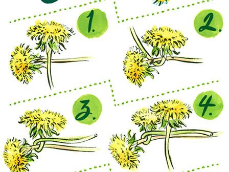 Dandy Dandelions! 'At Home Art - 36'