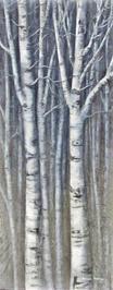 Shades of Birch