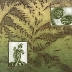 Janet Bourgeau, Ferns and Fiddleheads
