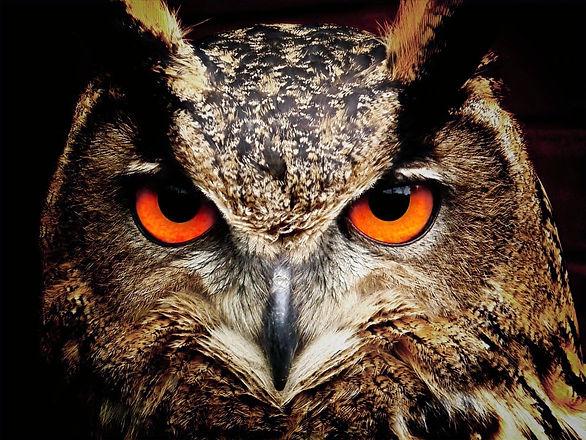 owl-50267_edited.jpg