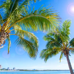 PALM TREES & BLUE SEAS