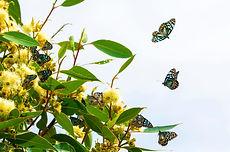 Butterflies_41.jpg