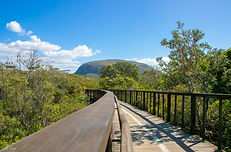 Mt Coolum Boardwalk_2 copy.jpg