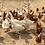 Thumbnail: UOVA del contadino 6 uova