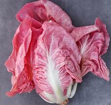 radicchio-rosa-kmzero.png