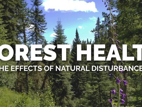 Forest Health & Natural Disturbances