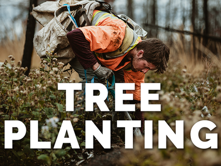 Tree Planting in the Forestry Sector