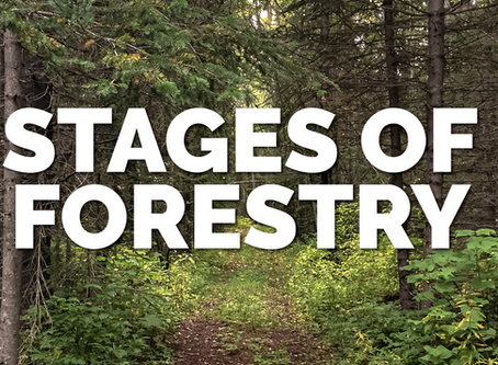 Stages Of Forestry