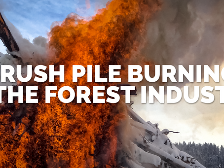 Brush Pile Burning in the Forest Industry