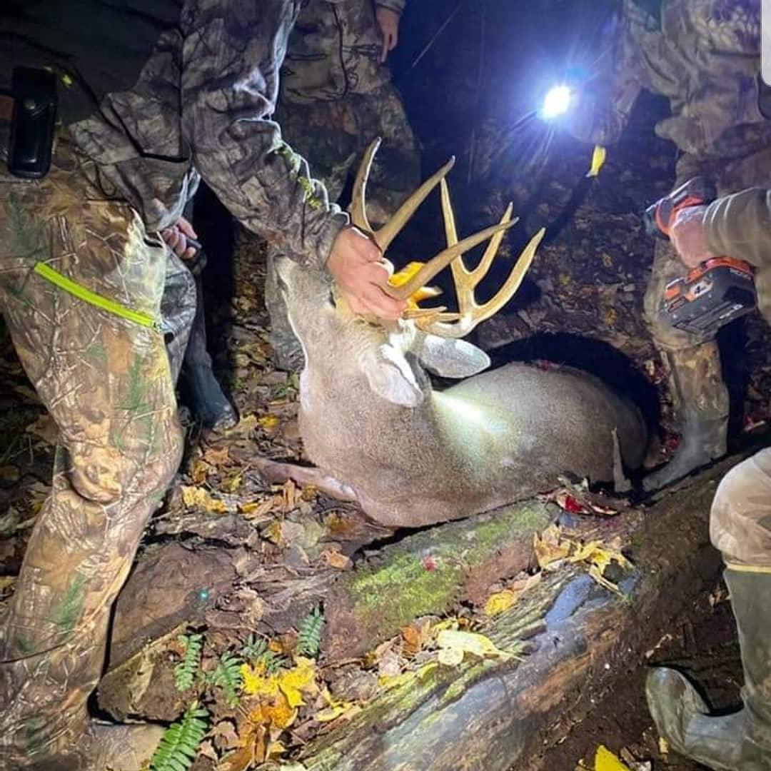 finding a deer