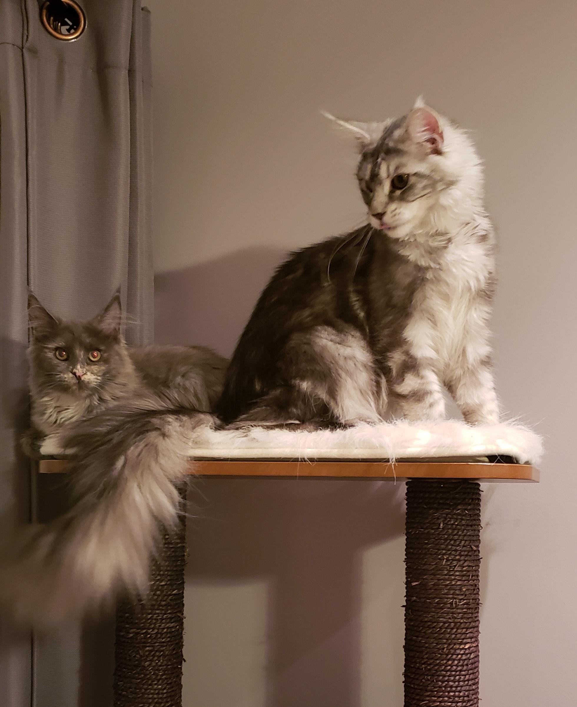 Mika and N'talia