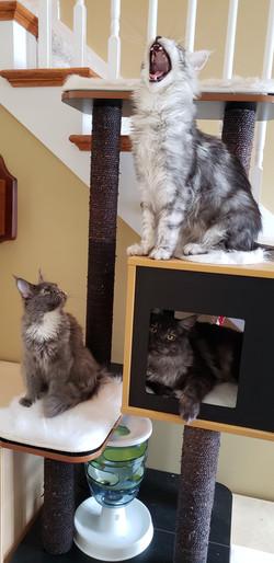 Wasabi, Mika and N'tailia