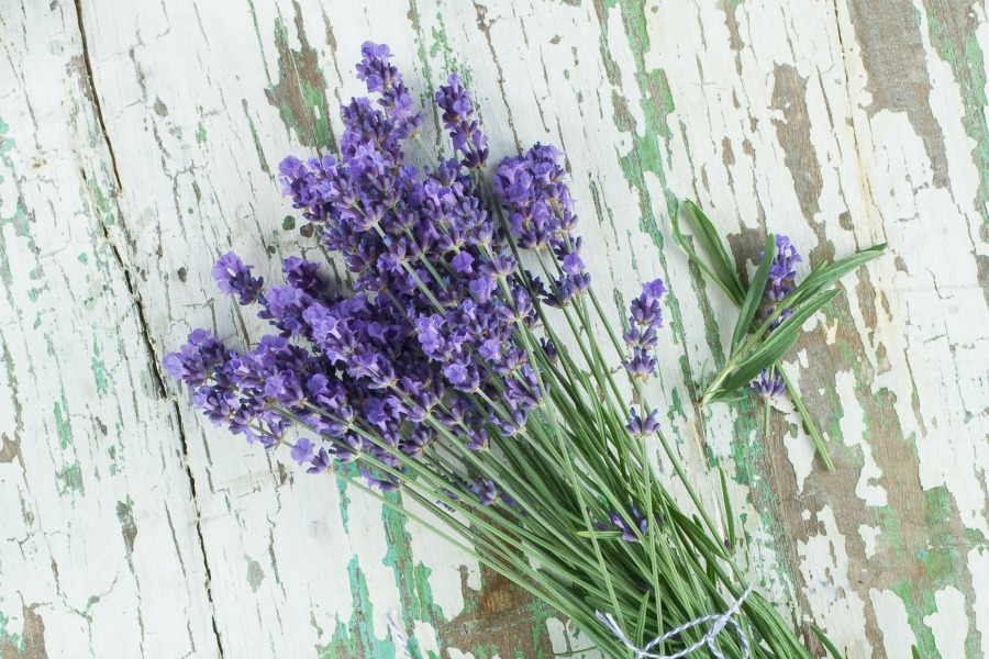 lavender with background