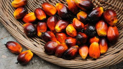 palm oil with background 2