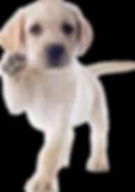 hulphond puppy.png