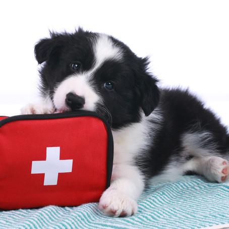 Cursus EHBO bij mens en hond