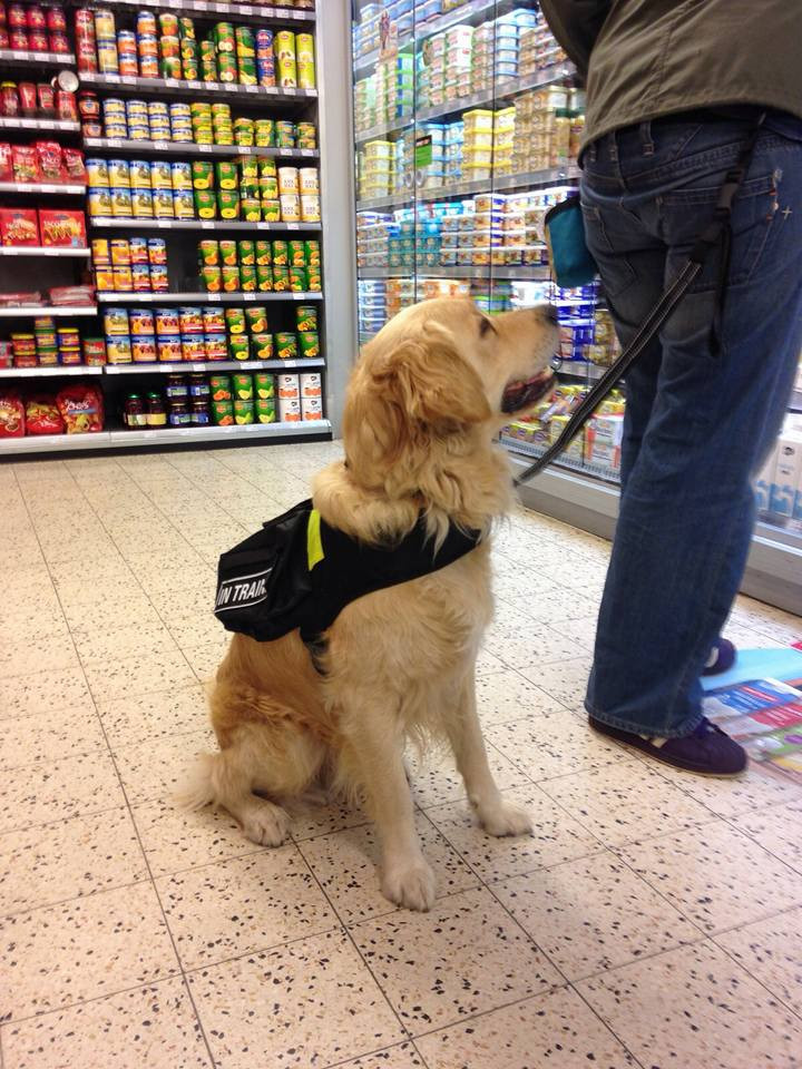 Autisme hond