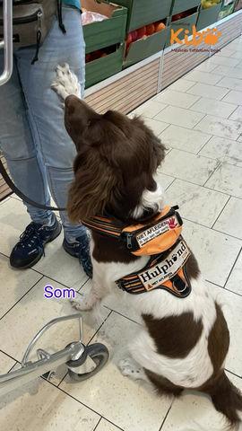 Diabetes Hulphond geeft een melding tijdens het winkelen