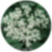 vadalma_korong (1) copy.jpg