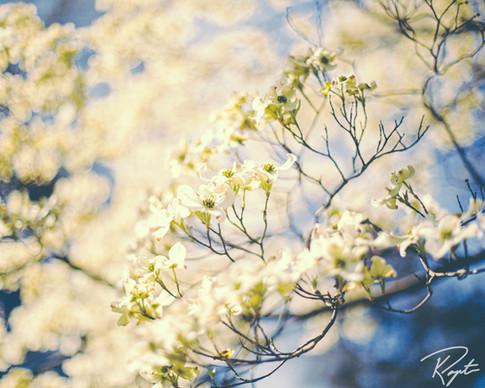 Spring Flowers wm-25.jpg