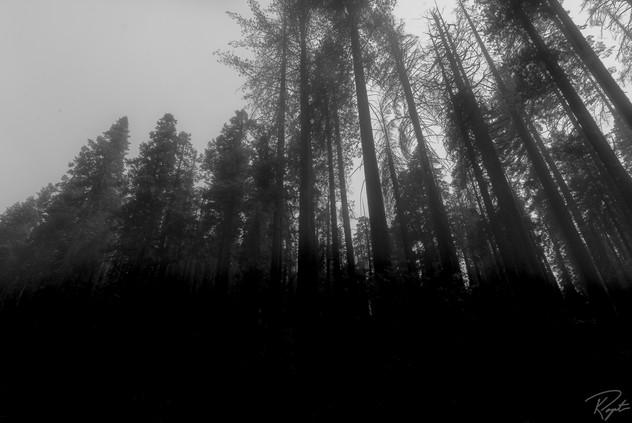 Yosem wm-0024.jpg