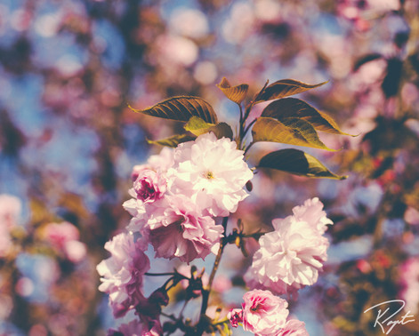 Spring Flowers wm-6.jpg