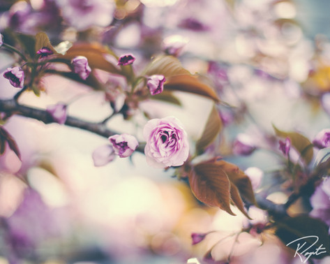 Spring Flowers wm-8.jpg