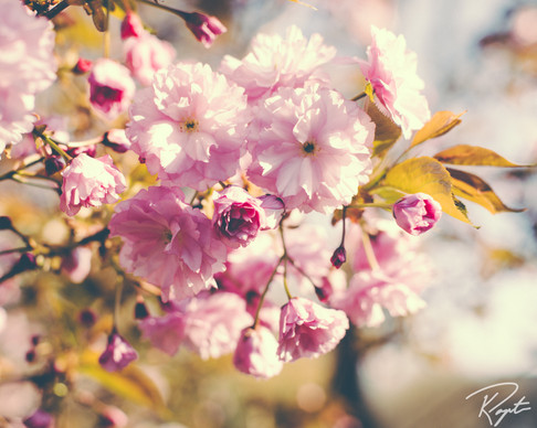 Spring Flowers wm-5.jpg