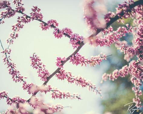 Spring Flowers wm-24.jpg