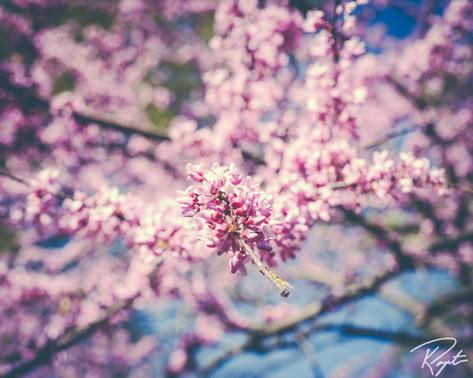 Spring Flowers wm-22.jpg