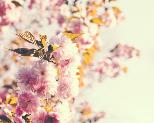 Spring Flowers wm-15.jpg