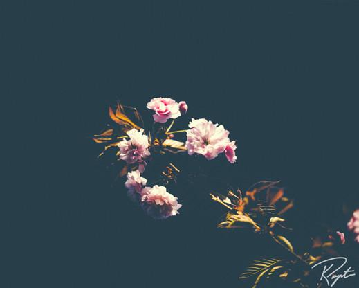 Spring Flowers wm-7.jpg