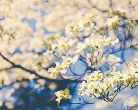 Spring Flowers wm-17.jpg