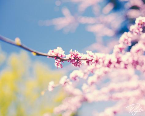 Spring Flowers wm-19.jpg