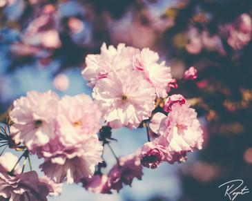 Spring Flowers wm-2.jpg