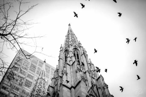 NYC Web-263.jpg