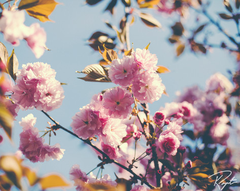 Spring Flowers wm-3.jpg
