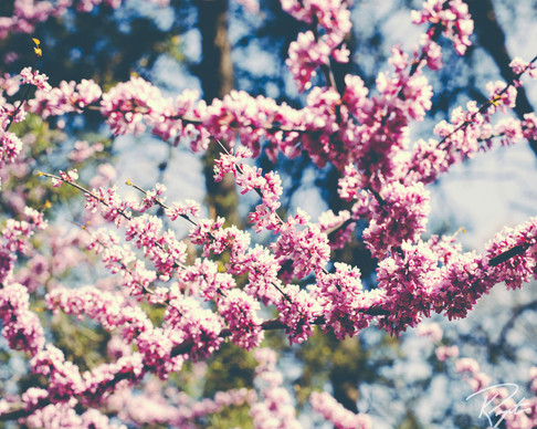 Spring Flowers wm-20.jpg
