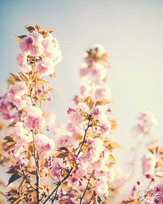 Spring Flowers wm-14.jpg