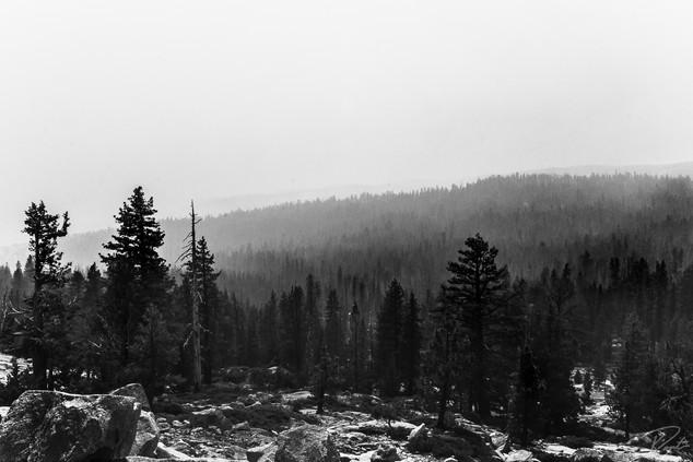 Yosem wm-0022.jpg