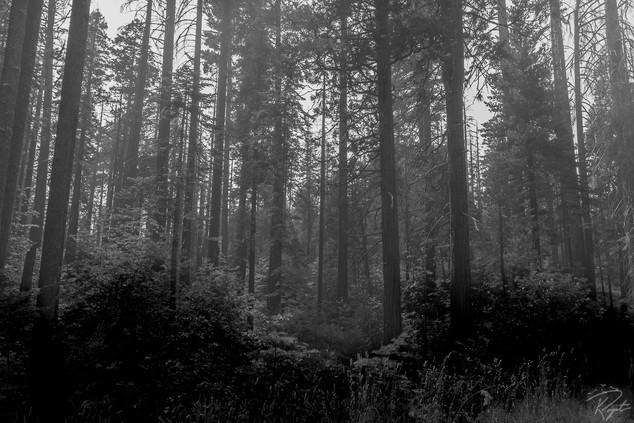 Yosem wm-0025.jpg