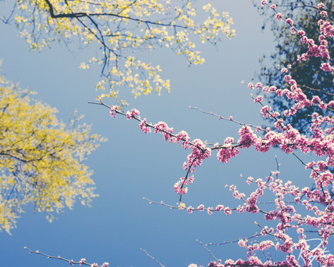 Spring Flowers wm-18.jpg