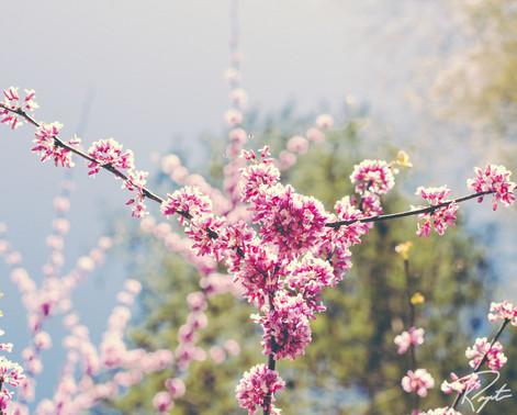 Spring Flowers wm-21.jpg